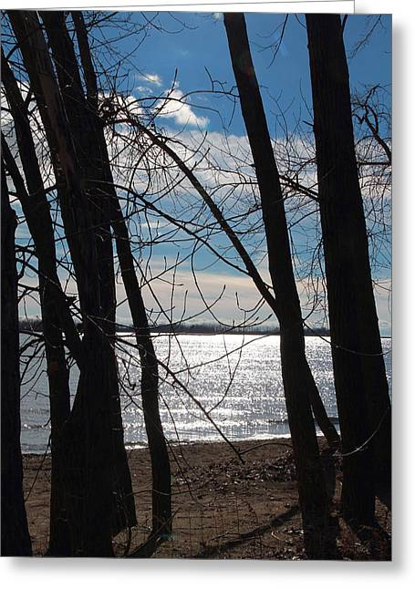 Greeting Card featuring the photograph Trees And Lake Reflections by Valentino Visentini