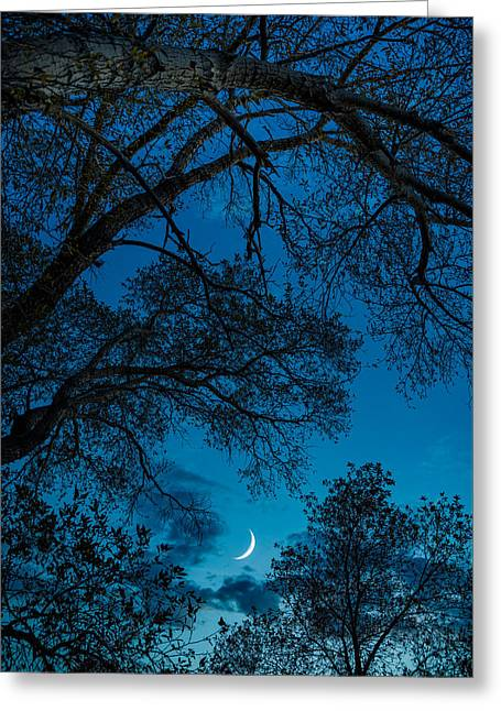 Trees And Moon Greeting Card