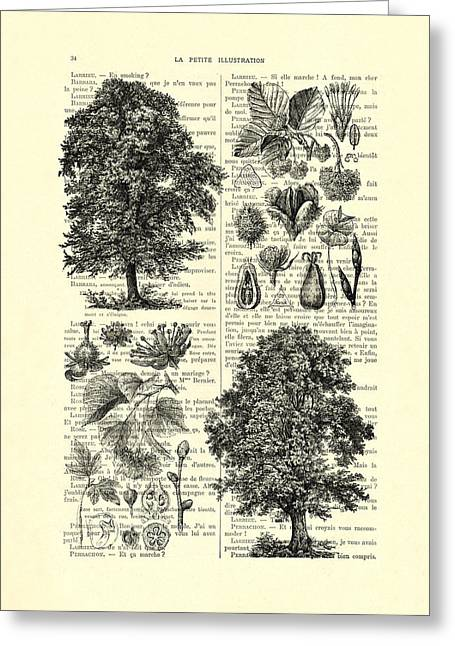Trees And Seeds Black And White Greeting Card by Madame Memento