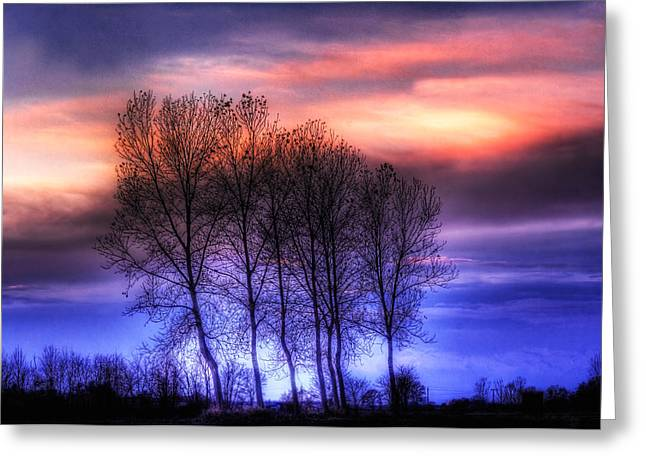 Trees And Twilight Greeting Card
