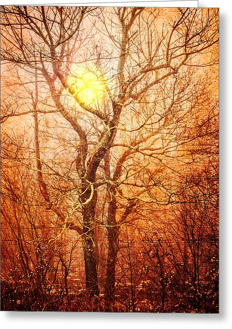 Trees At Sunset Greeting Card by Debra and Dave Vanderlaan