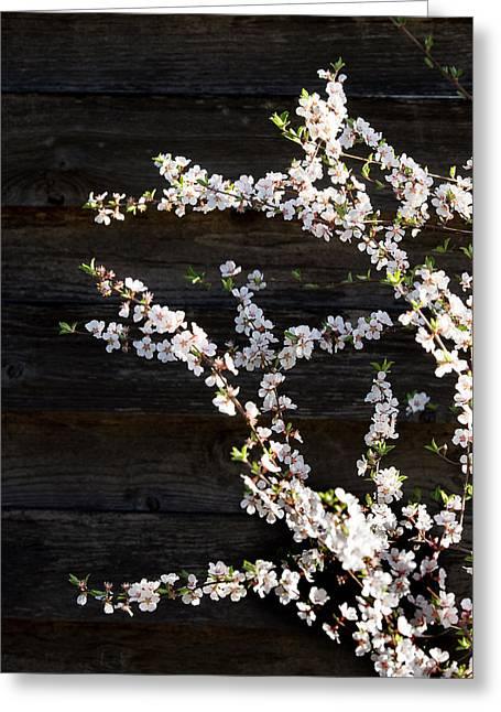 Trees - Blooming Flowers Greeting Card