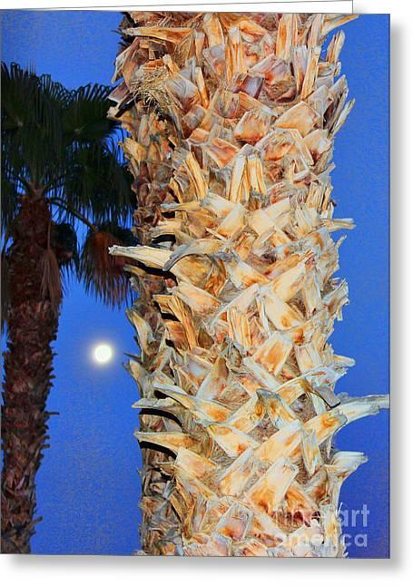 Trees Capture Sun Greeting Card