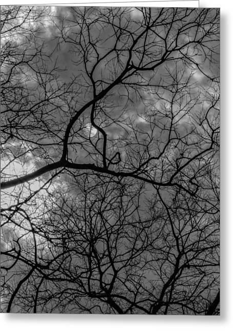 Trees Clouds And Sun Greeting Card by Robert Ullmann