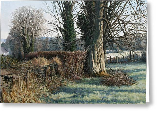 Trees Early Morning In Winter Greeting Card by Eugene Conway