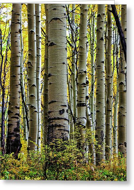 Trees For The Forest Greeting Card by Jennifer Grover