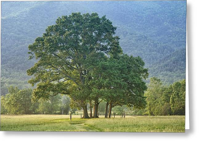 Trees - Great Smoky Mountains - Meadow Greeting Card