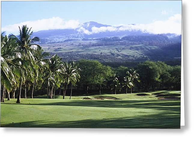Trees In A Golf Course, Makena Golf Greeting Card by Panoramic Images