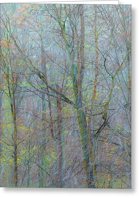 Trees In A Snowstorm Greeting Card