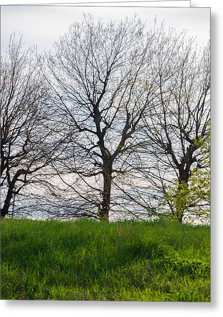 Trees In April - 2  Greeting Card by Andrea Mazzocchetti