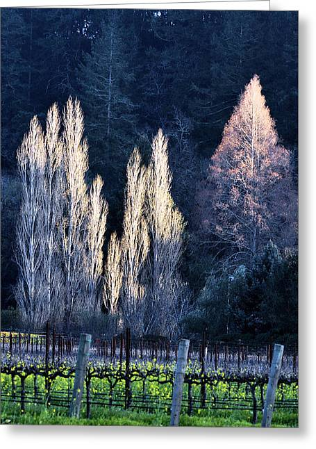 Trees In Fall Napa Valley Greeting Card by Josephine Buschman