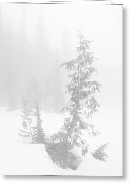 Trees In Fog Monochrome Greeting Card