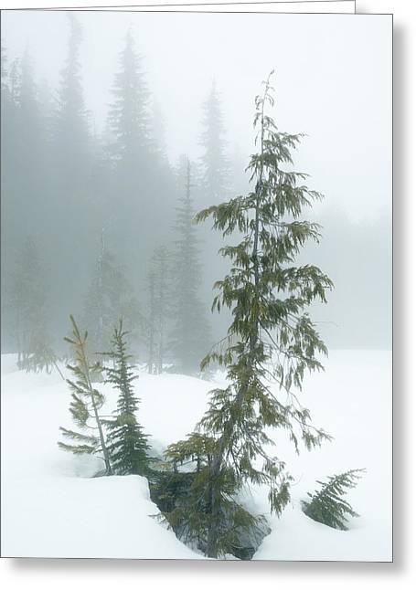 Trees In Fog Greeting Card