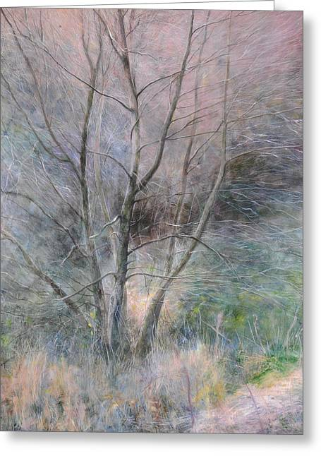 Trees In Light Greeting Card by Harry Robertson