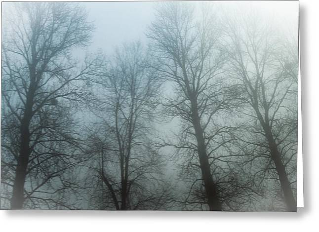 Trees In Mist Greeting Card by Tetyana Kokhanets