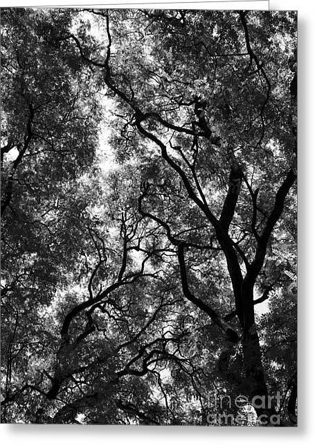 Trees In Park Greeting Card