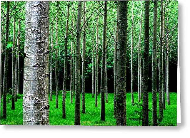 Trees In Rows Greeting Card