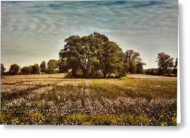 Trees In The Cotton Field Greeting Card by Jai Johnson