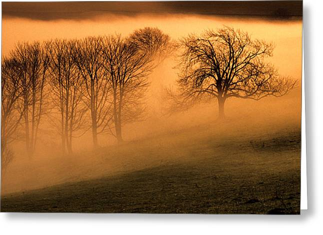 Trees In The Mist Greeting Card by Hazy Apple