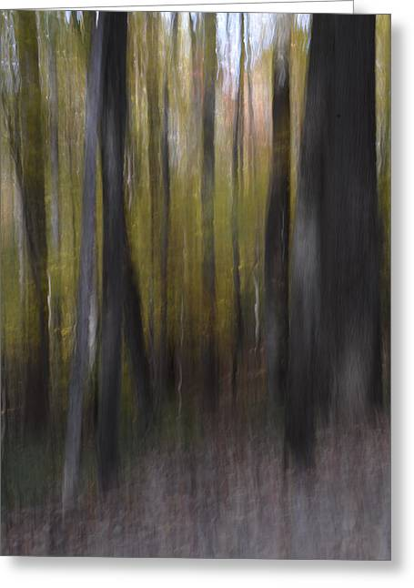 Trees In The Mist Greeting Card by Patricia Twardzik