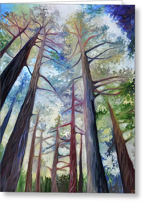 Trees In The Morning Greeting Card by Cedar Lee