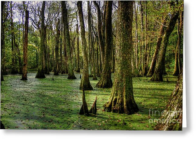 Trees In The Swamp Greeting Card