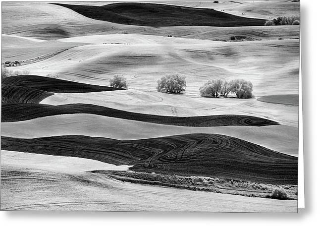 Trees In The Valley Greeting Card by Jon Glaser