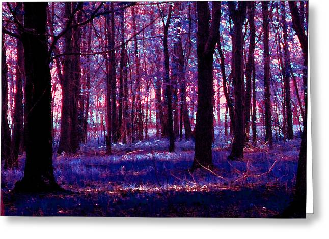 Greeting Card featuring the photograph Trees In The Woods In Pink And Blue by Michelle Audas