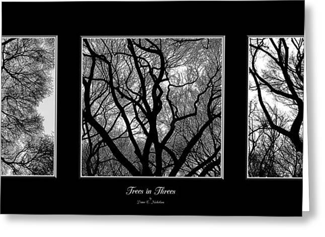 Trees In Threes Greeting Card by Diane C Nicholson