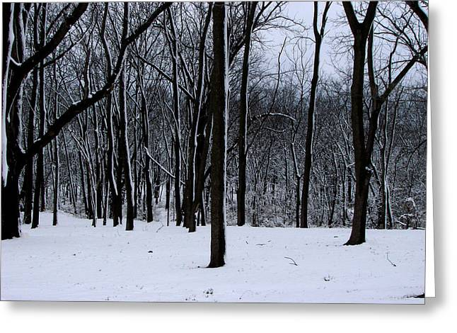 Trees In Winter Greeting Card by Dave Clark