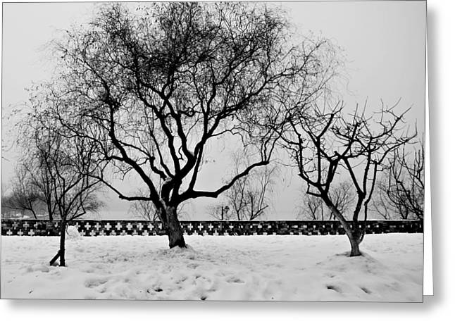 Trees In Winter Greeting Card by Dean Harte