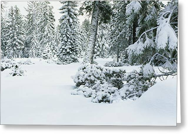 Trees Lake Tahoe Ca Greeting Card by Panoramic Images