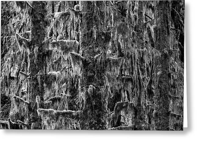 Trees - Monochrome Greeting Card