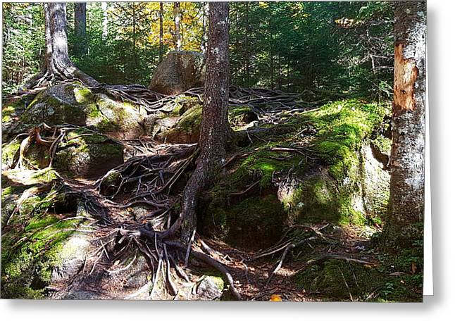 Trees - Mont Tremblant National Park Greeting Card