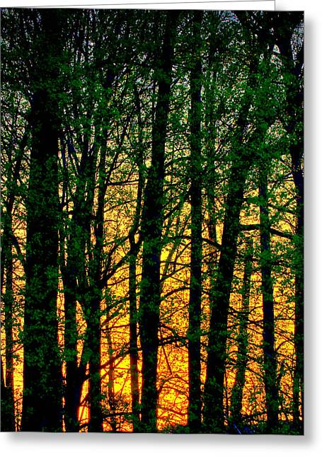 Trees No.2 Greeting Card by Michael Putnam
