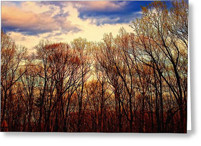 Trees No.3 Greeting Card by Michael Putnam