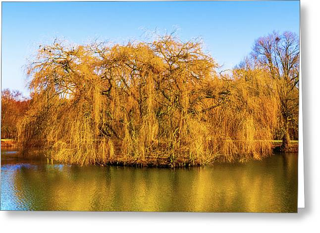 Trees Of Gold Greeting Card by Wim Lanclus