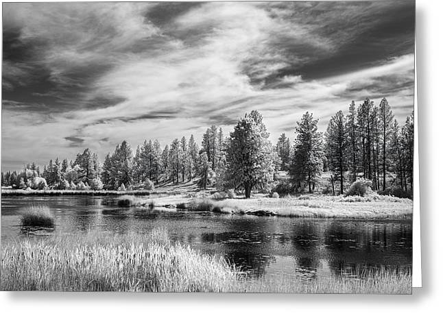 Trees Of The Preserve Greeting Card by Jon Glaser