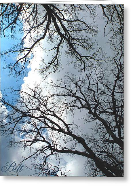 Trees Of Wildwood Greeting Card by Christine Belt