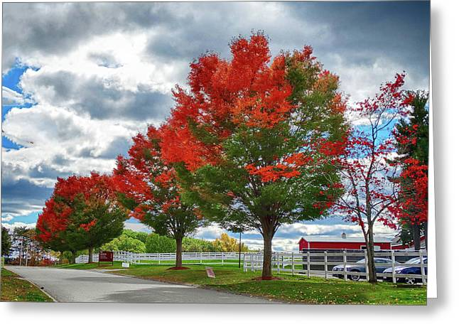 Trees On Fire Greeting Card by Bill Dussault