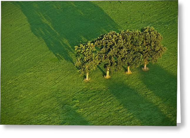 Trees On Green Greeting Card by Heiko Koehrer-Wagner