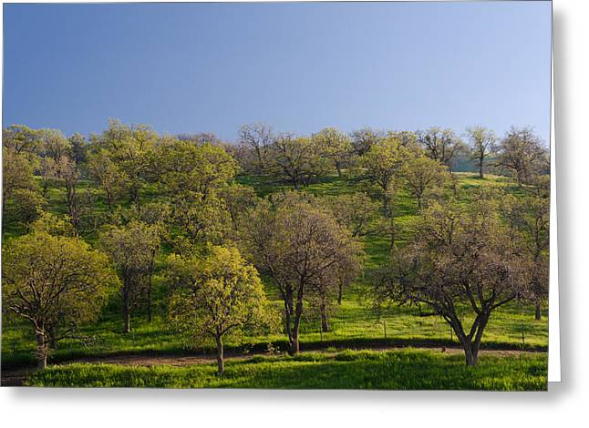 Greeting Card featuring the photograph Trees On Hillside by Mike Evangelist