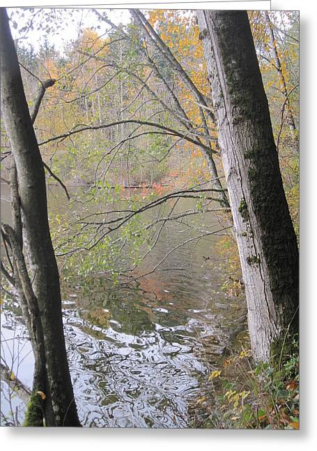 Greeting Card featuring the photograph Trees On Lake Padden by Karen Molenaar Terrell