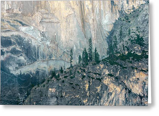 Trees On Ledge Greeting Card by Alexander Kunz