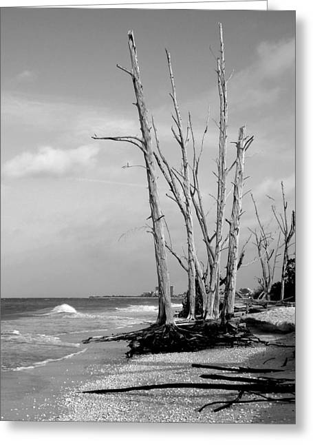 Trees On The Beach Black And White Greeting Card by Rosalie Scanlon