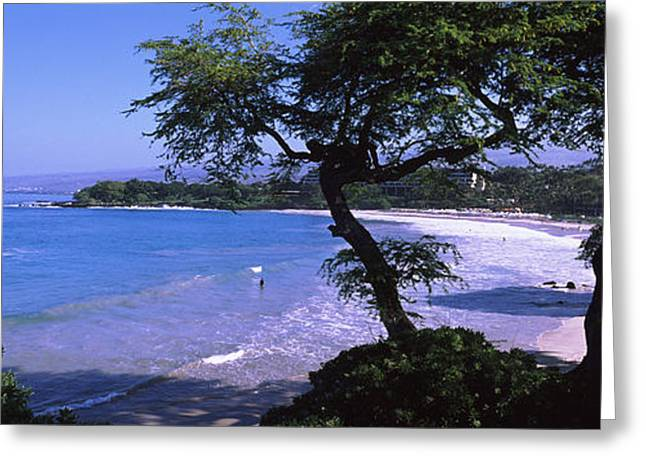 Trees On The Beach, Mauna Kea, Hawaii Greeting Card by Panoramic Images