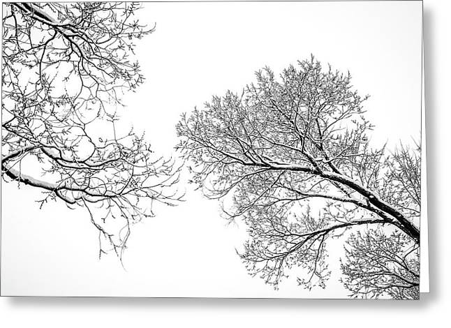 Greeting Card featuring the photograph Trees Reaching by Marilyn Hunt