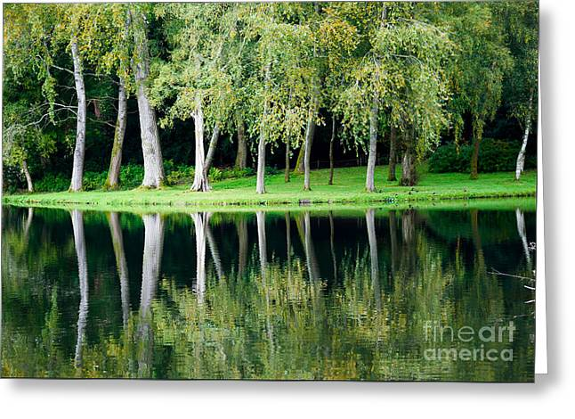Trees Reflected In Water Greeting Card by Colin Rayner