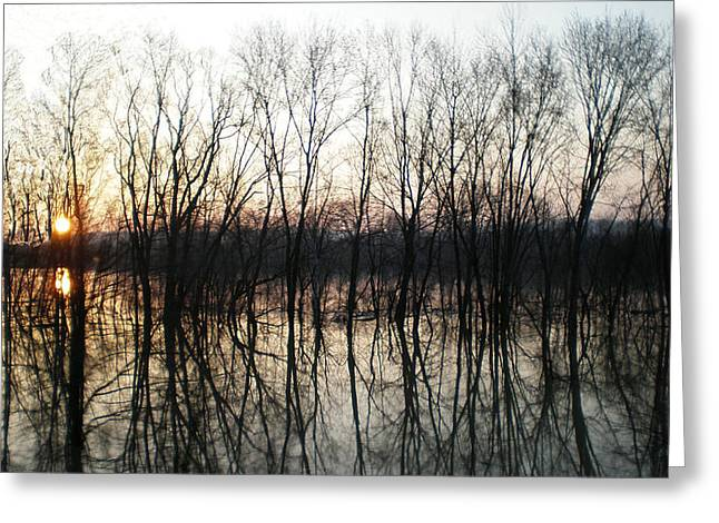 Trees Reflecting On The Water Greeting Card by Martie DAndrea