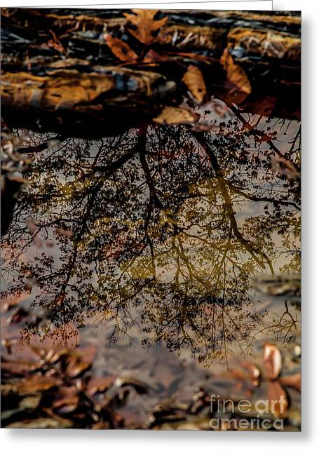Greeting Card featuring the photograph Tree's Reflection by Iris Greenwell